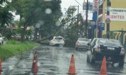 Munícipe flagra a queda de uma árvore na Avenida Loreto