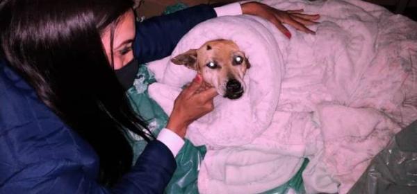 Prefeitura cria ronda noturna de recolhimento e auxílio para animais de rua neste inverno